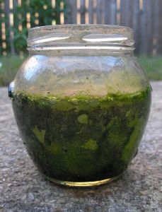 Méregtelenítés algával